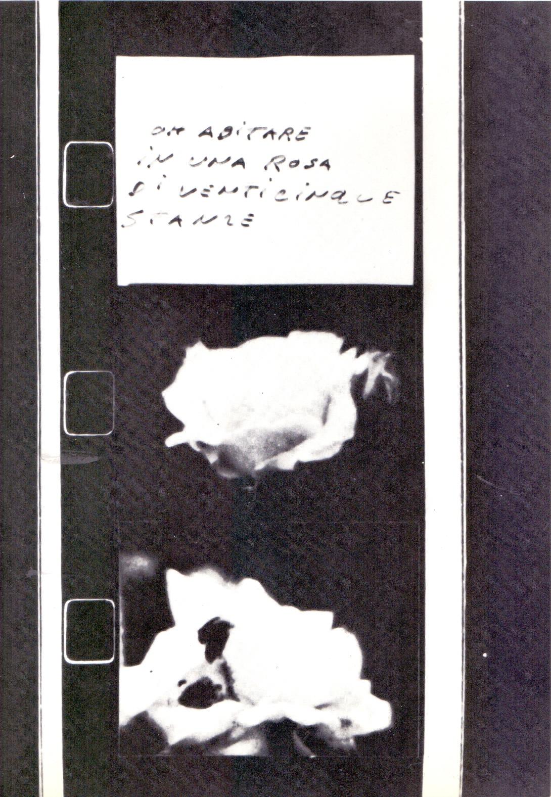 Poesia qualepoesia/10: Antonio Massari. Oh abitare in una rosa di 25 stanze